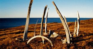 kitovaja-alleja