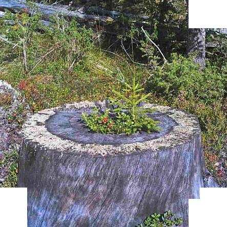 gora-vottovaara-v-karelii