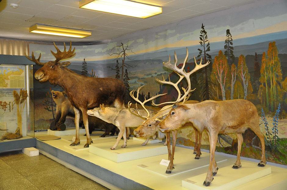 Областной краеведческий музей архангельска фото